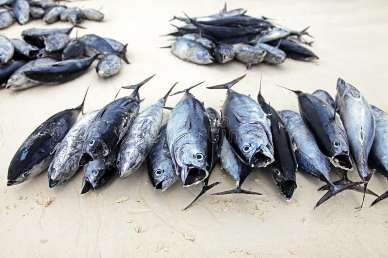 Штабелированные рыбы на каменном рыбном базаре городка стоковая фотография