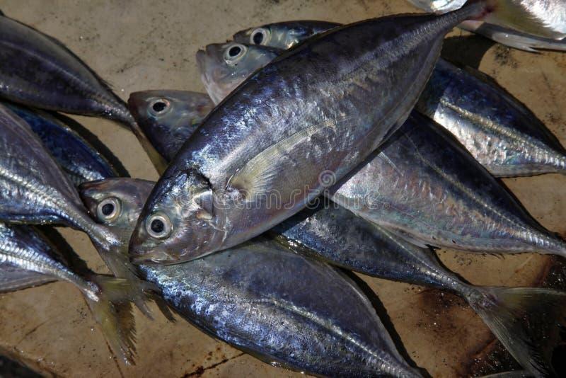 Штабелированные рыбы на каменном рыбном базаре городка стоковое изображение