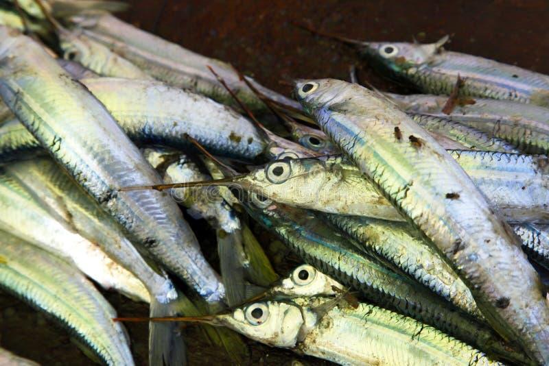 Штабелированные рыбы на каменном рыбном базаре городка стоковое фото rf