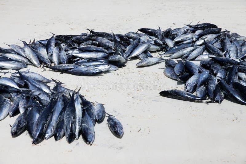 Штабелированные рыбы на каменном рыбном базаре городка стоковая фотография rf