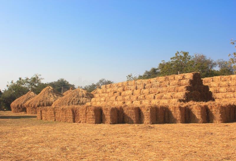 Штабелированные Bales сена стоковые фото
