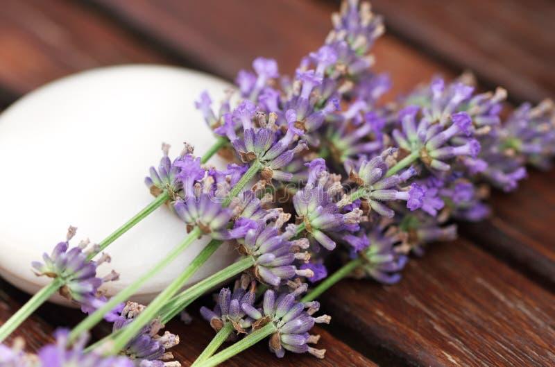 штанга цветет мыло лаванды естественное стоковые изображения