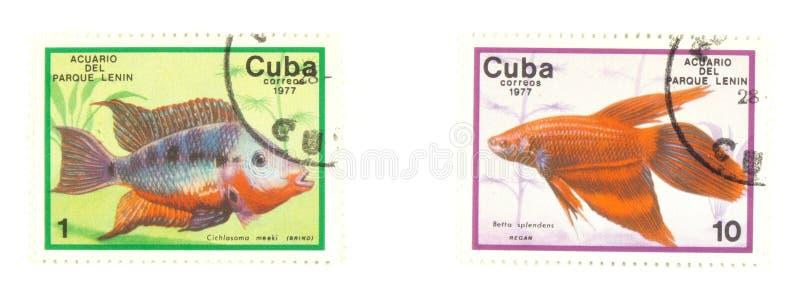 штемпеля рыб Кубы стоковые фотографии rf
