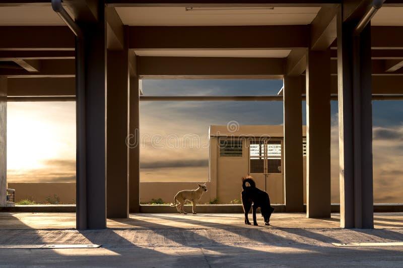 Штендеры под зданием с собаками стоковое фото