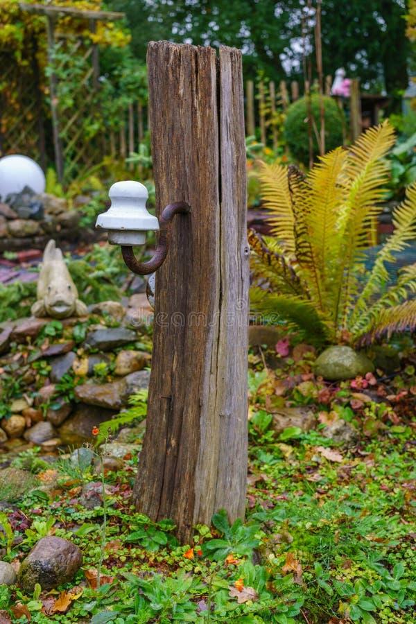 штендер дуба в саде стоковые изображения
