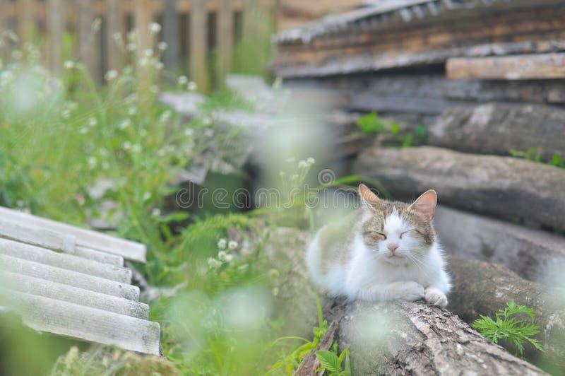 штилевой кот стоковая фотография rf