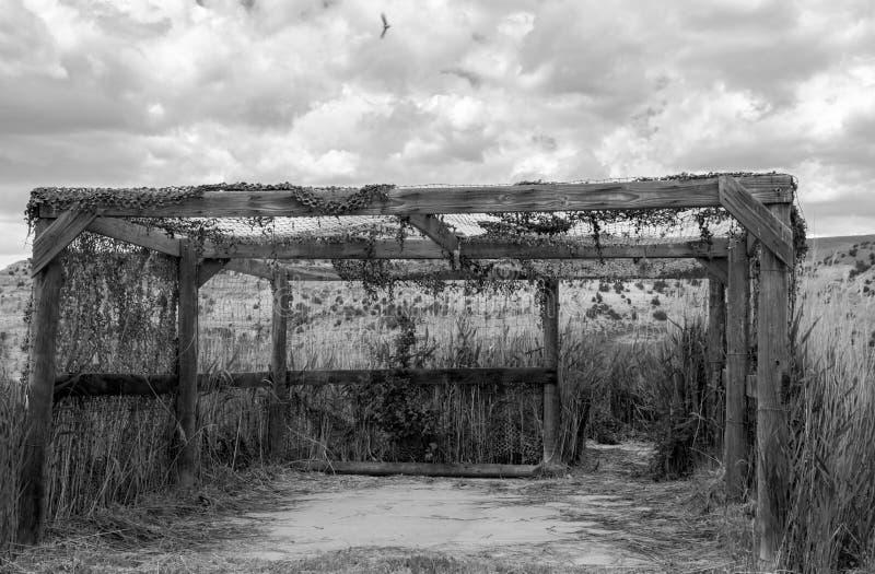 Шторки вдоль привода живой природы, черно-белого, коричневые цвета наблюдать птицы паркуют в Колорадо стоковая фотография rf