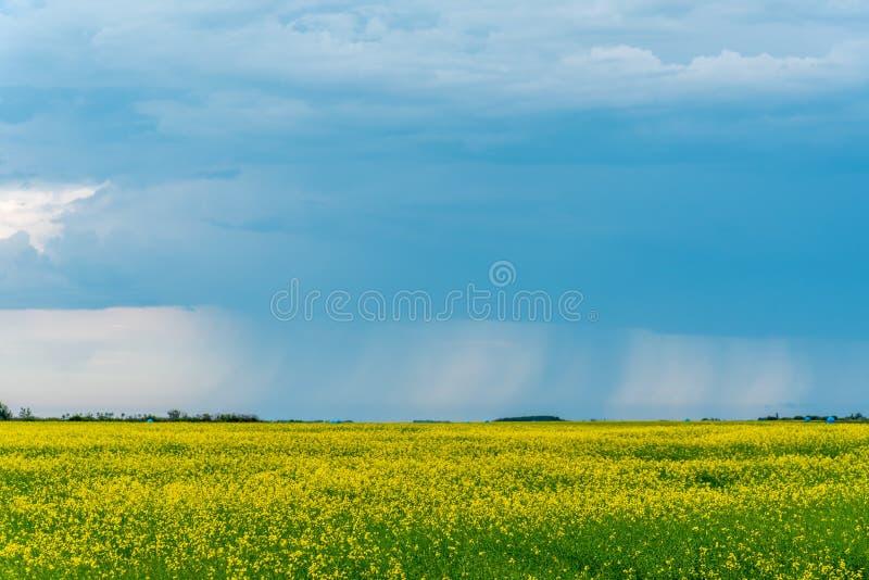 Штормы прерии подметают над канола полями стоковые изображения rf