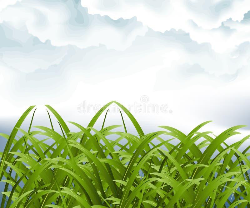 шторм зеленого цвета злаковика облака иллюстрация вектора