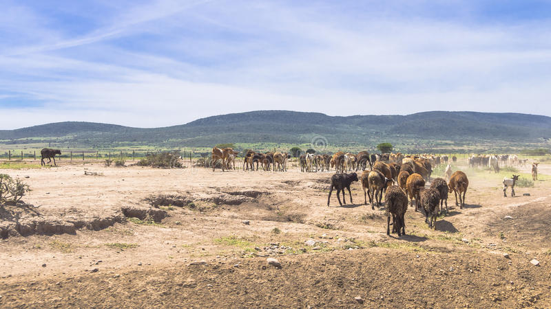 Штоссели в Африке стоковое изображение rf