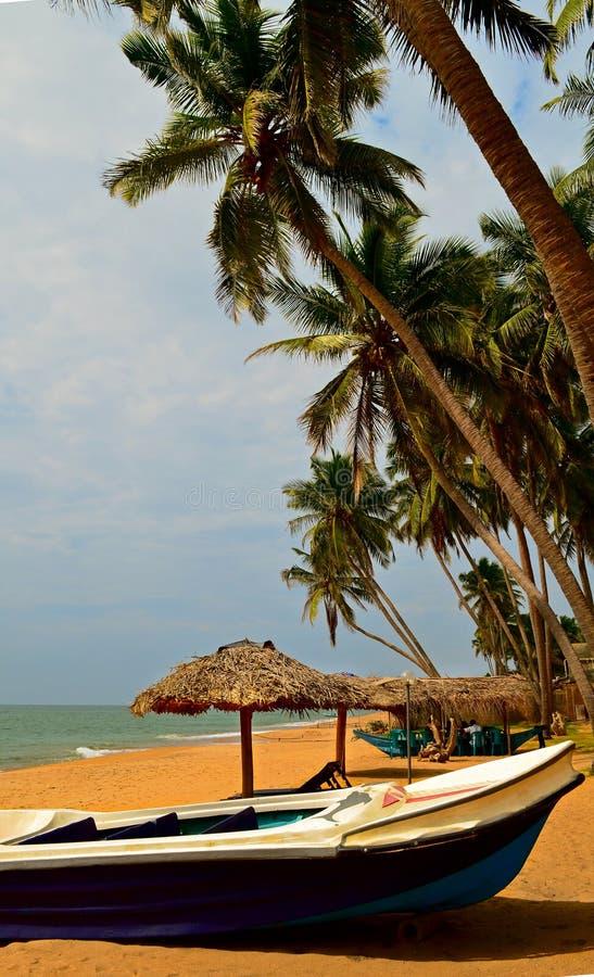 Шлюпка и ладони на Шри-Ланке (Цейлон) стоковые изображения rf