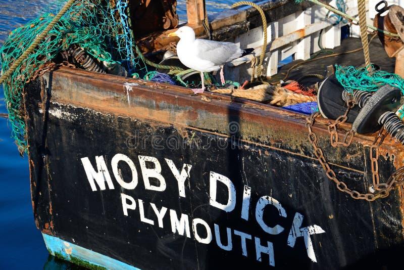 Шлюпка члена Moby и чайка, Weymouth стоковое изображение rf