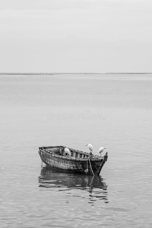 Шлюпка Egret и древесины стоковое изображение