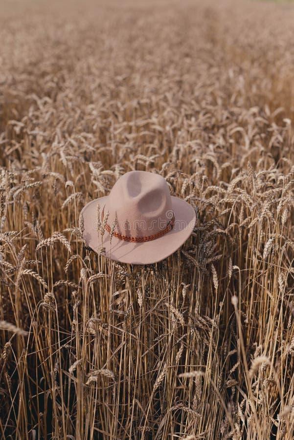 Шляпа в пшеничном поле стоковые фото