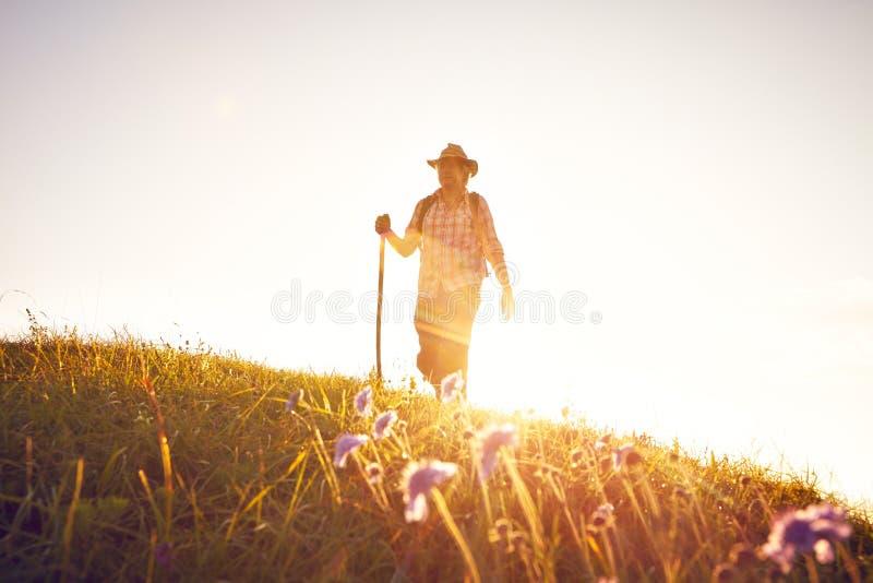 Шляпа backlight человека луга лета стоковое изображение rf
