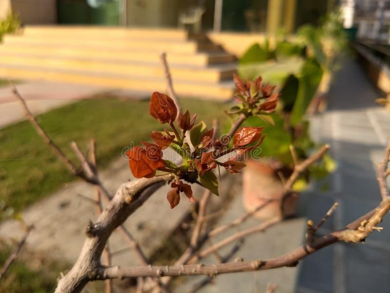 Щель жизни весны как раз вне стоковое фото