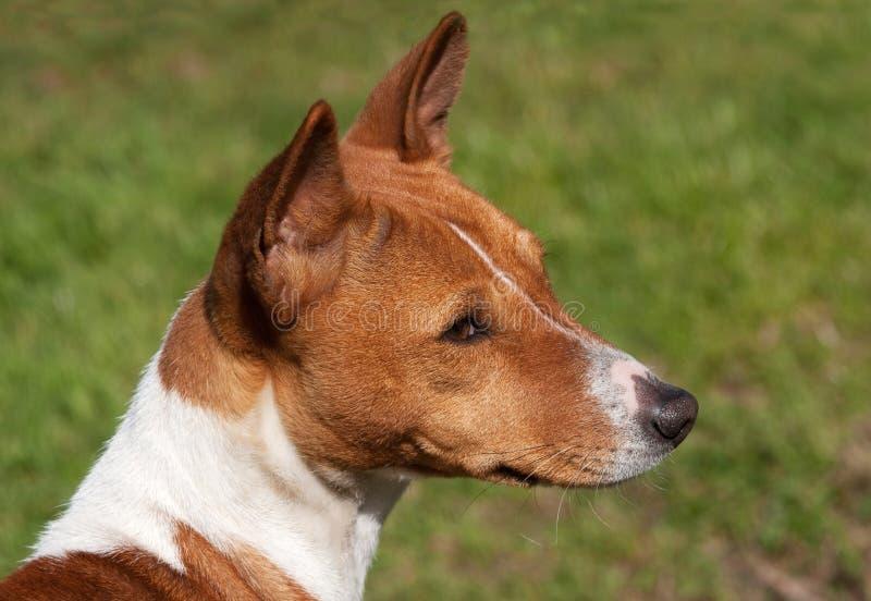 щенок душевный стоковое изображение rf