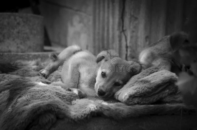 Щенок лежа на одеяле на улице стоковая фотография
