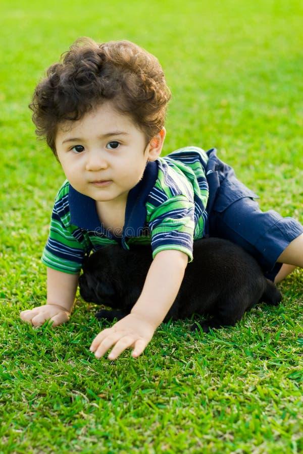 щенок малыша стоковая фотография rf