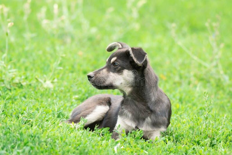 Щенок на траве стоковое фото rf