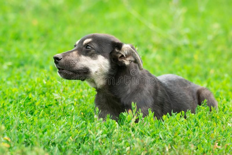 Щенок на траве стоковое фото