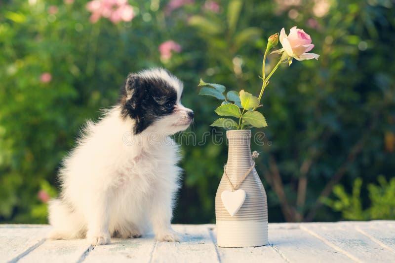 Щенок обнюхивает цветок стоковые фото