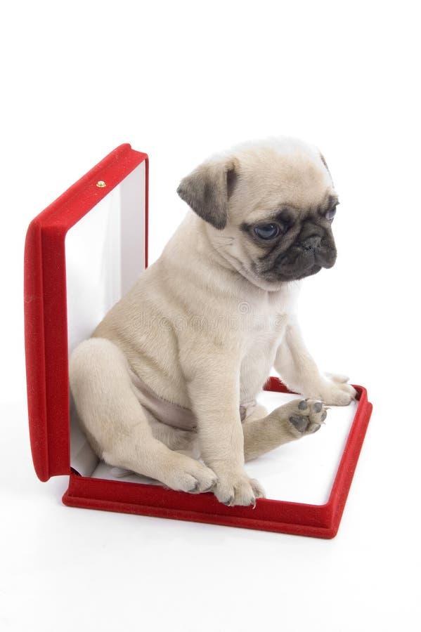 щенок ожерелья коробки милый стоковая фотография