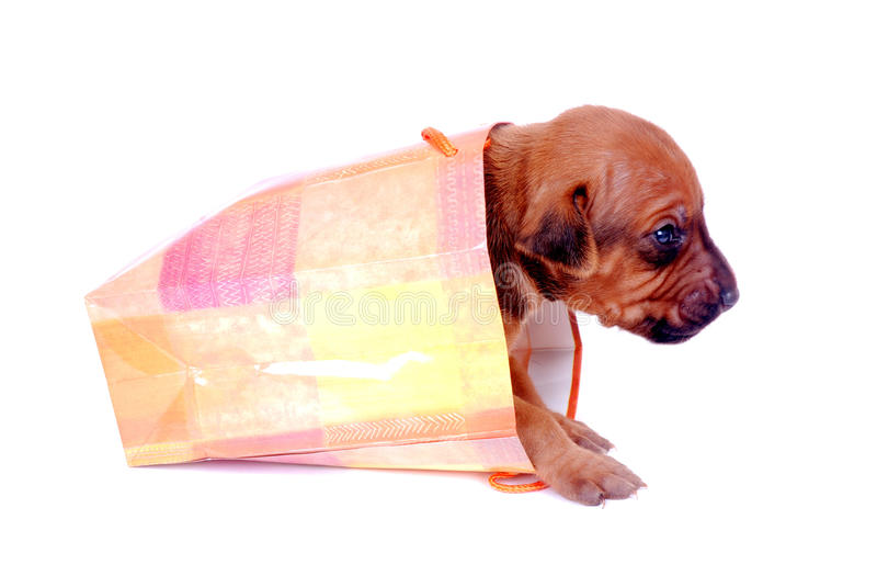 щенок подарка мешка вползая вне стоковое изображение