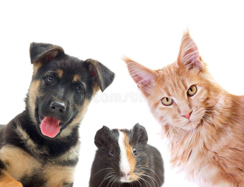 щенок портрета намордника котенка предпосылки близкий половинный вверх по белизне стоковые изображения rf