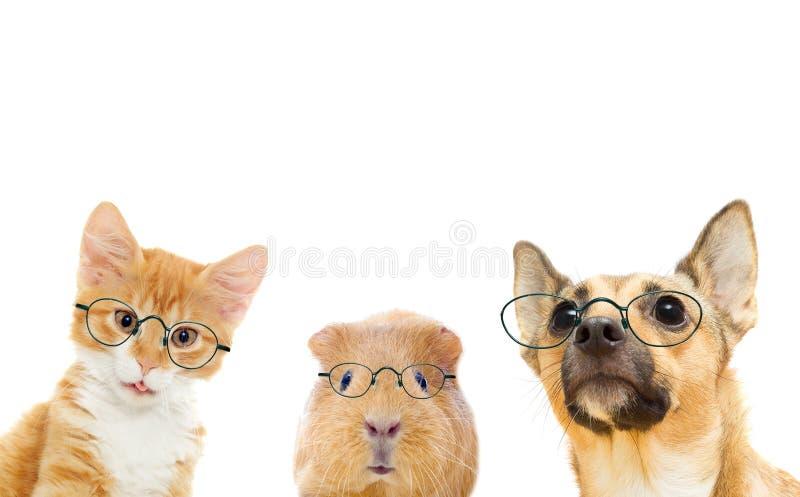 щенок портрета намордника котенка предпосылки близкий половинный вверх по белизне стоковые изображения