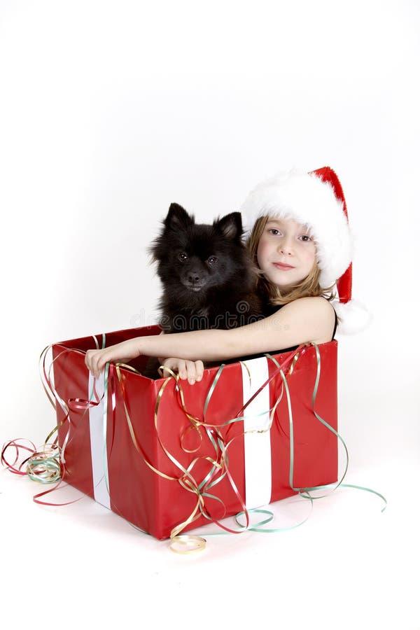щенок собаки рождества стоковое фото rf