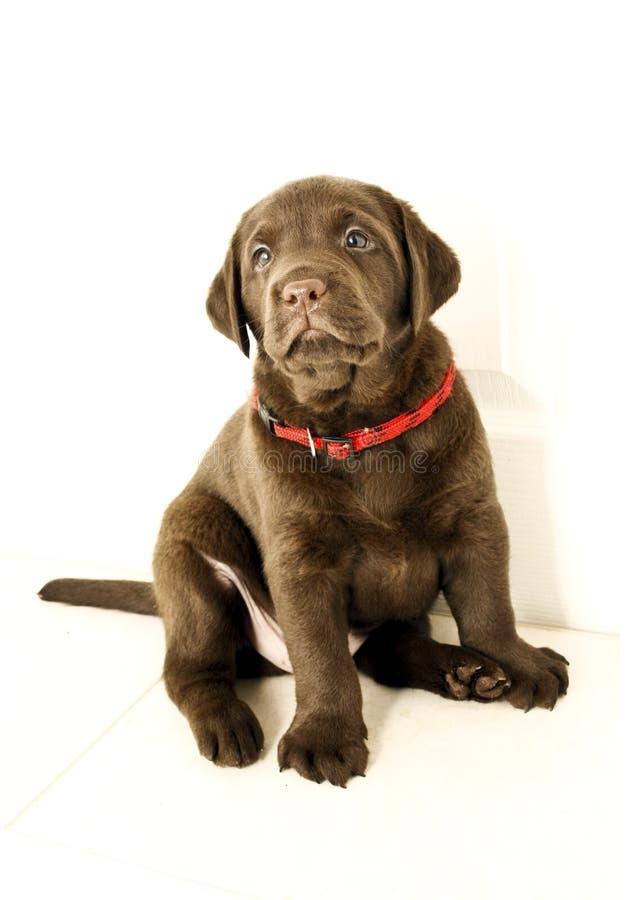 щенок собаки славный стоковые фото