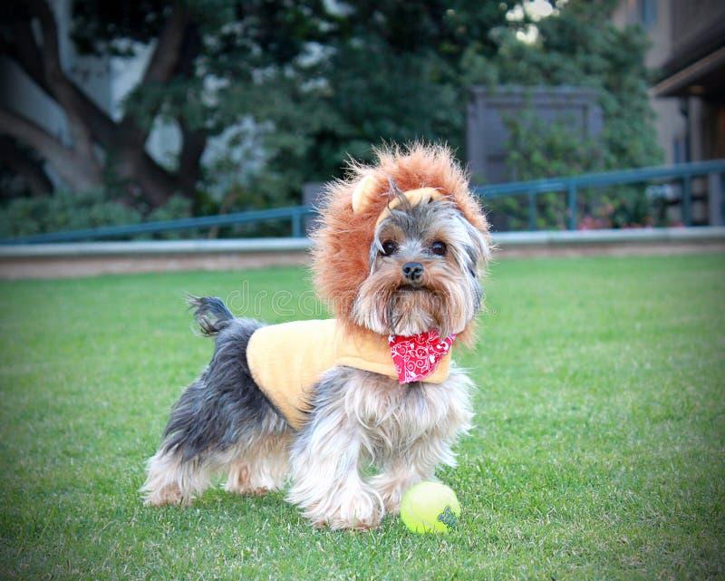 щенок собаки шаловливый стоковое фото