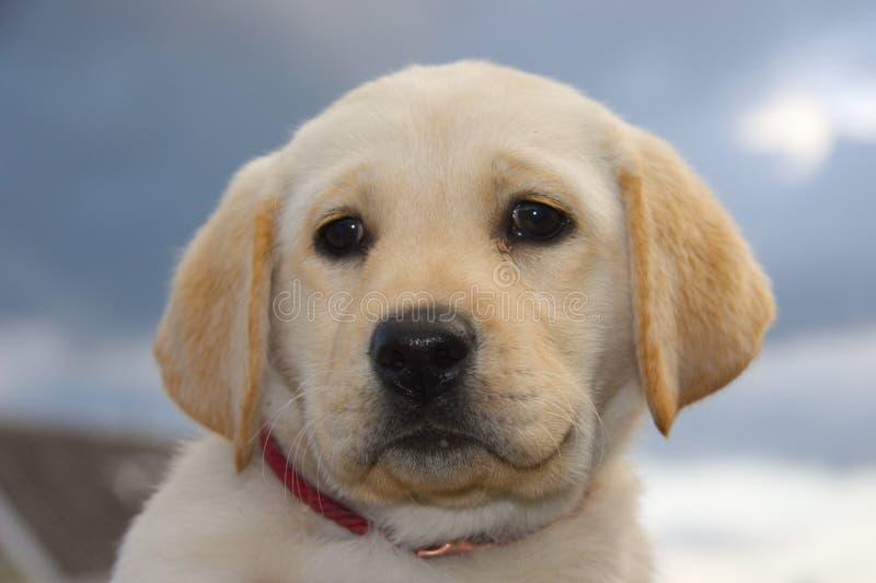 щенок собаки стоковая фотография