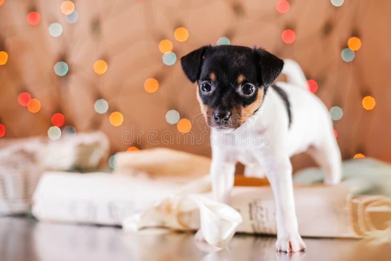 Щенок терьера лисы игрушки породы собаки стоковое фото