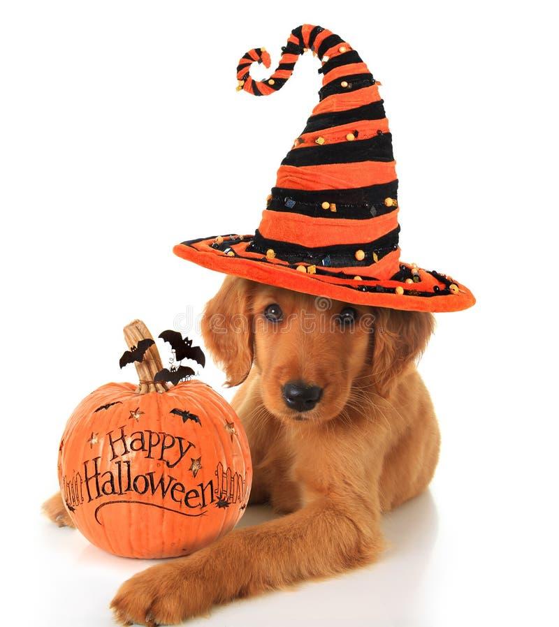 Щенок хеллоуина стоковое изображение
