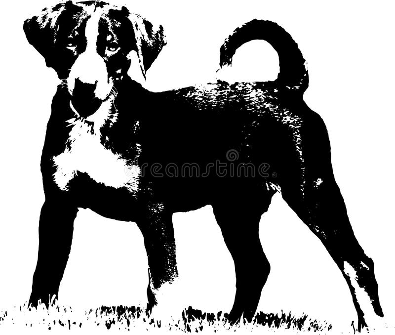 Щенок Appenzeller - иллюстрация стоковые фото