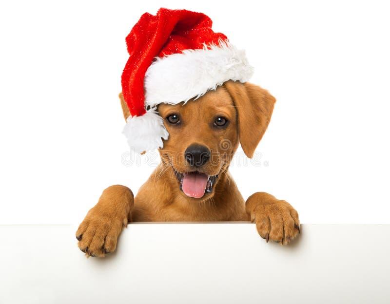 щенок santa шлема рождества стоковое фото