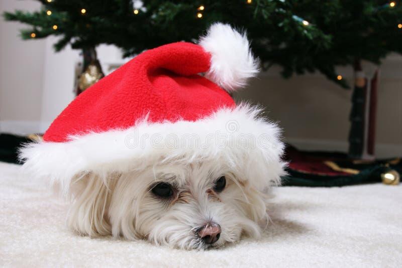 щенок santa стоковое изображение rf