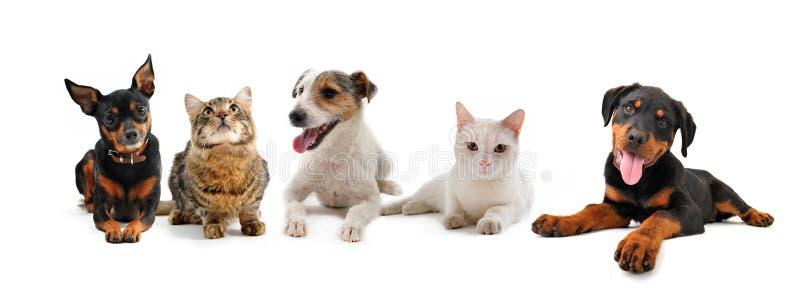 щенята группы котов стоковая фотография