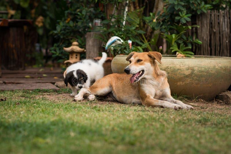 щенята мати собаки стоковое фото rf