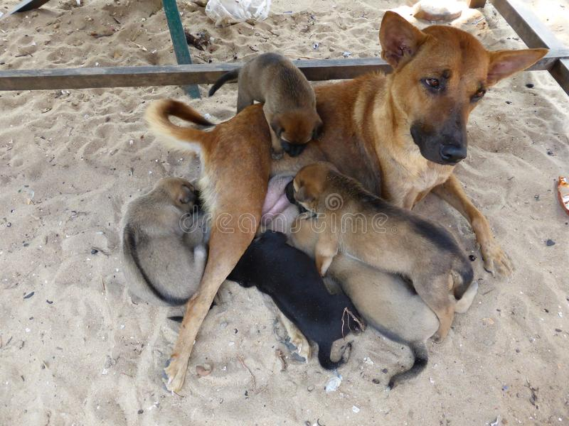 Щенята милой собаки подавая стоковые изображения rf