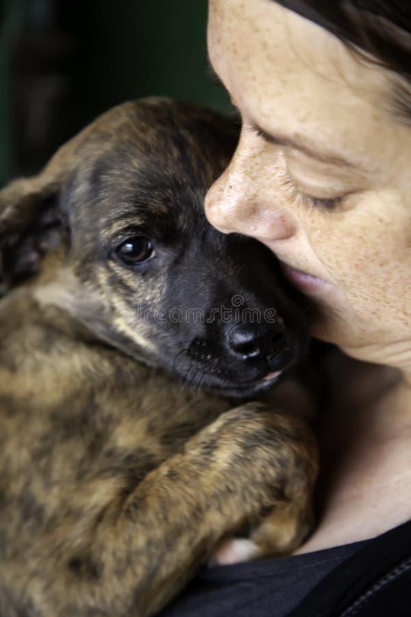 Щенята отказались от собаки стоковая фотография