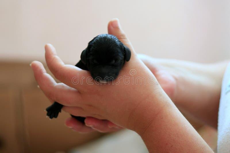 Щенята собаки стоковое изображение