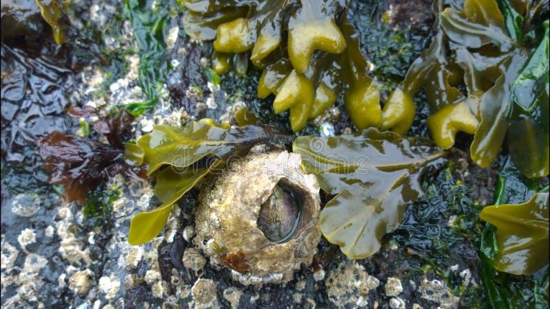 Щипцы в море стоковые фото