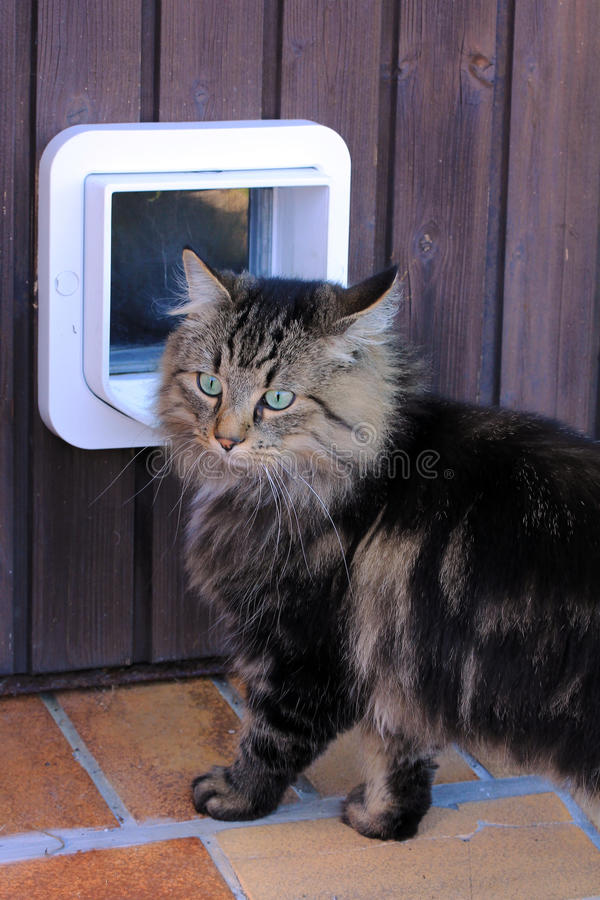 Щиток кота стоковая фотография