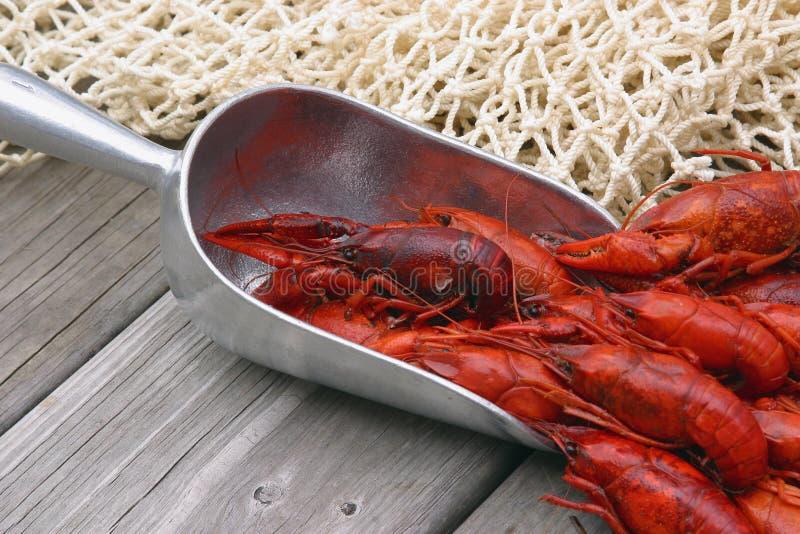 Download ые Crawfish зачерпнутые вверх Стоковое Фото - изображение насчитывающей cajun, сервировка: 490648