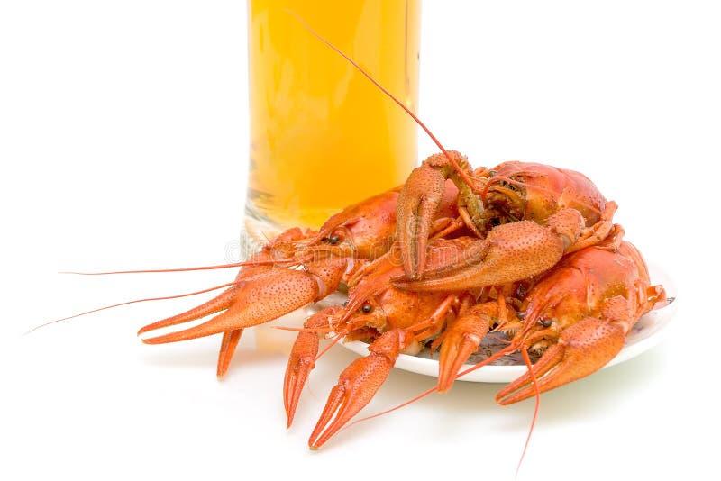 ые crayfish крупного плана стоковая фотография