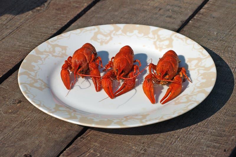 ый красный цвет 3 crawfish стоковая фотография