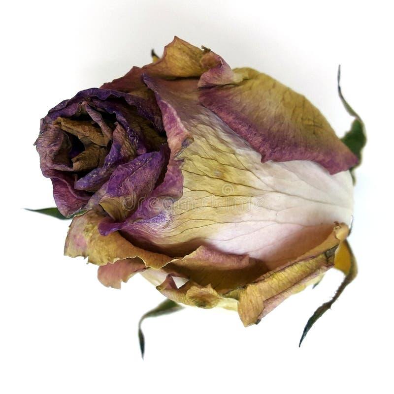 ый цветок стоковое фото rf